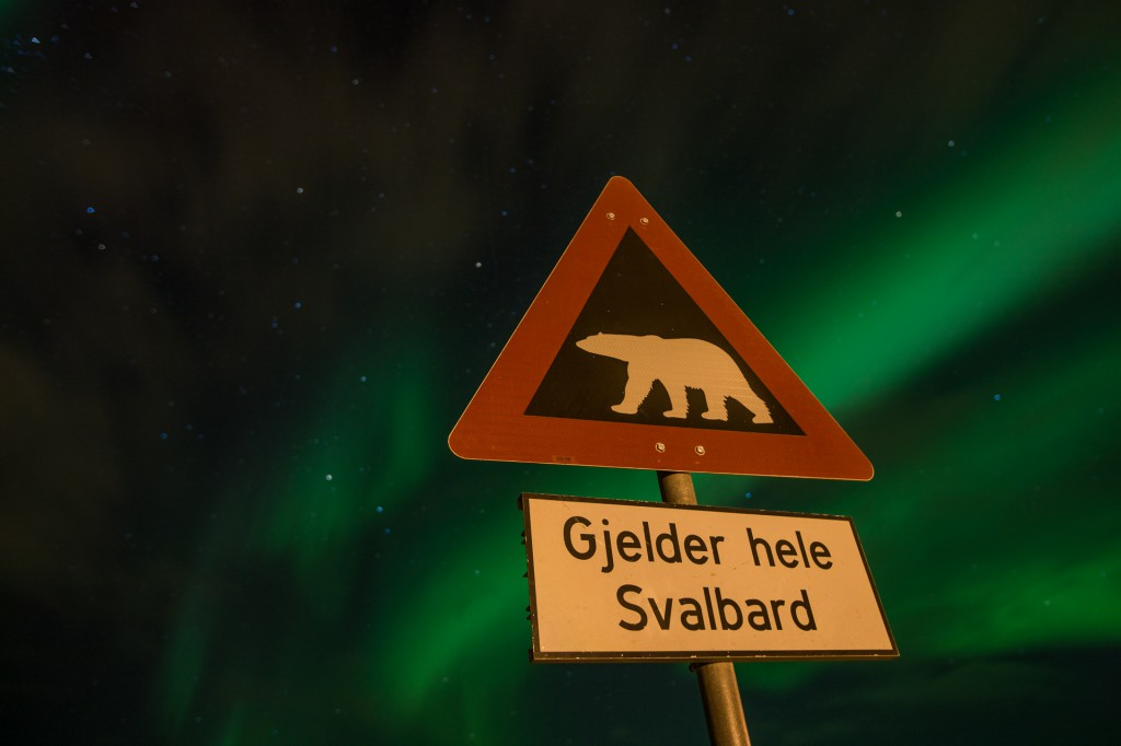 Northern lights Svalbard, Polarbearsign